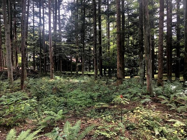 敷地を見てきました ~ 軽井沢 I さんの家サムネイル
